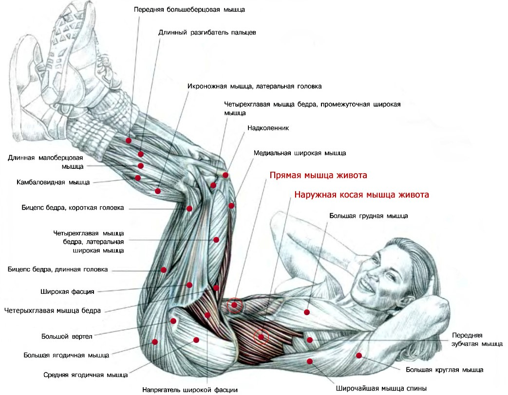 Анатомические особенности и нюансы раскачки бокового пресса