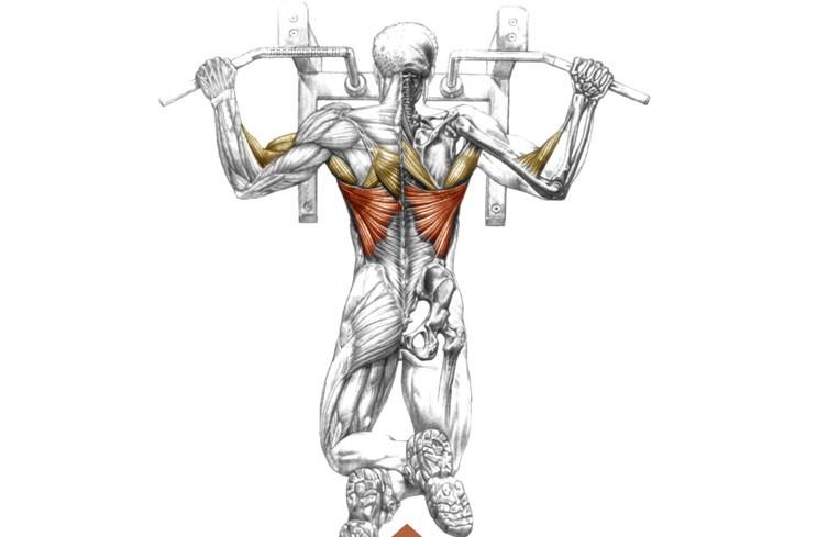 Как накачать мышцы плеч