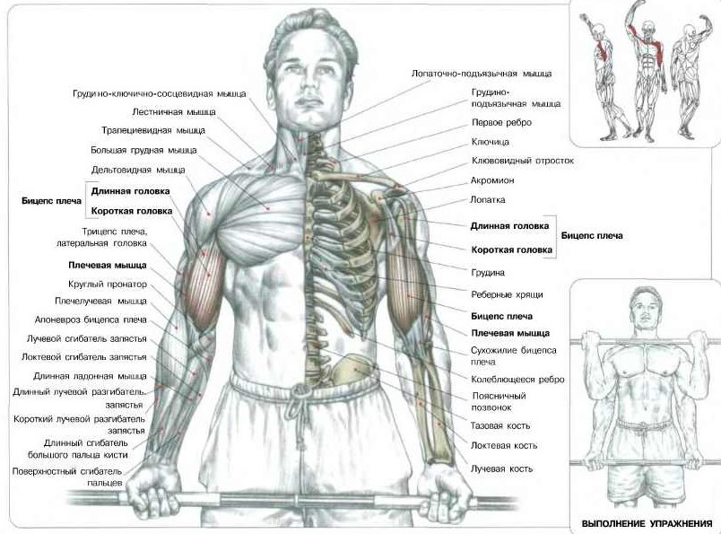 Упражнения на руки в тренажерном зале