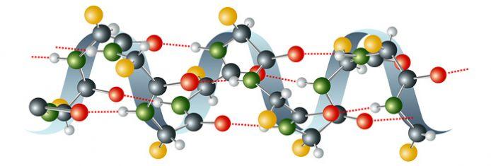 aminokisloty