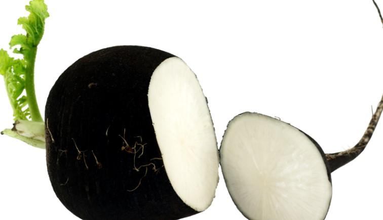 Черная редька - полезные свойства и противопоказания