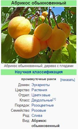 Абрикос - википедия
