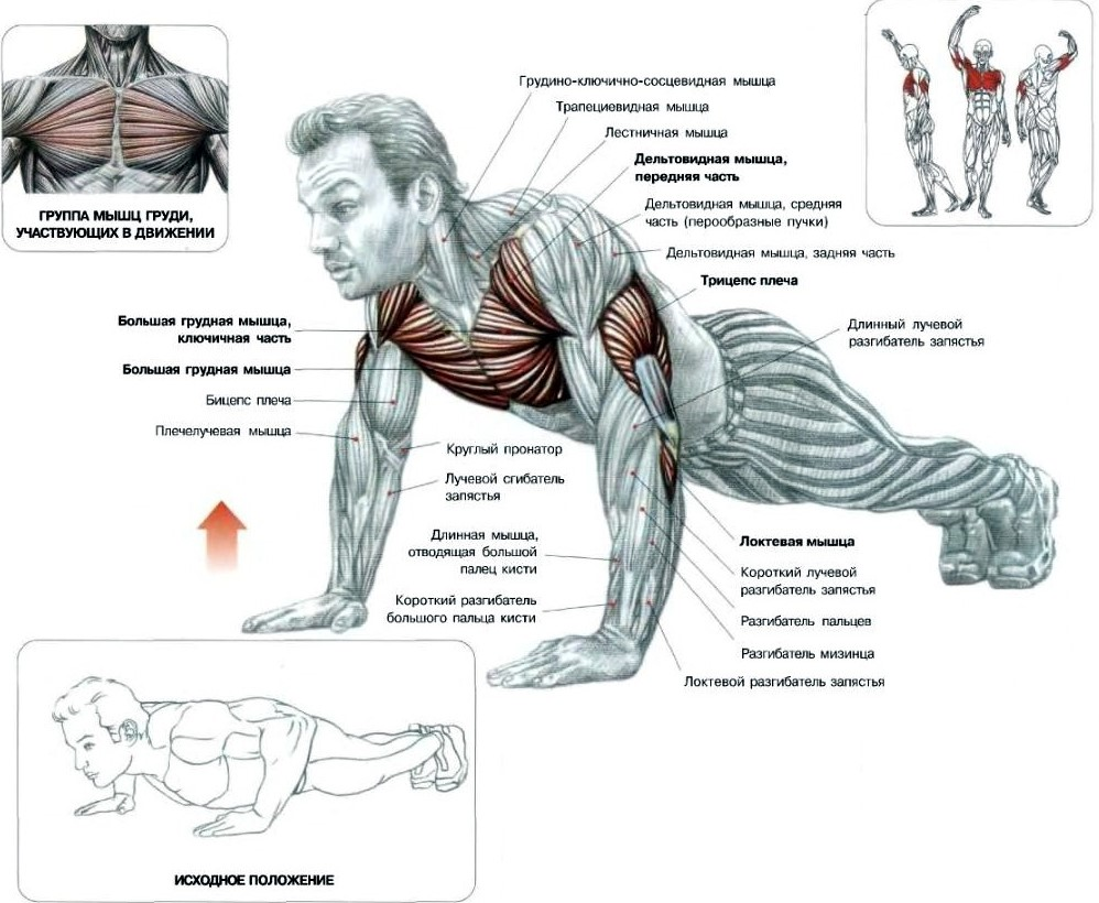 Отжимания для грудных мышц