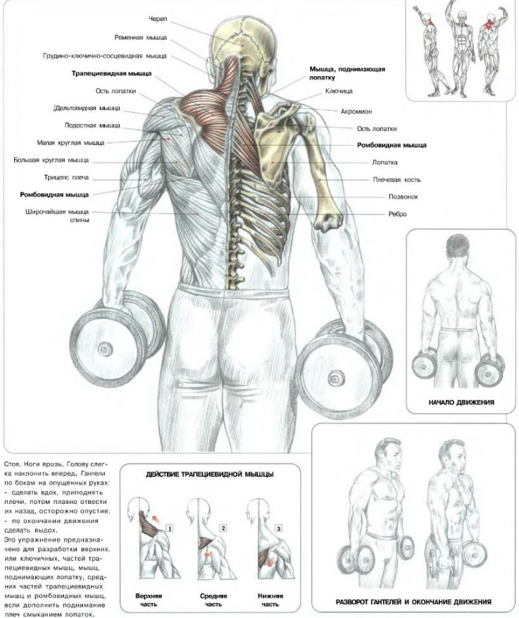 Упражнения для трапеций (шея)