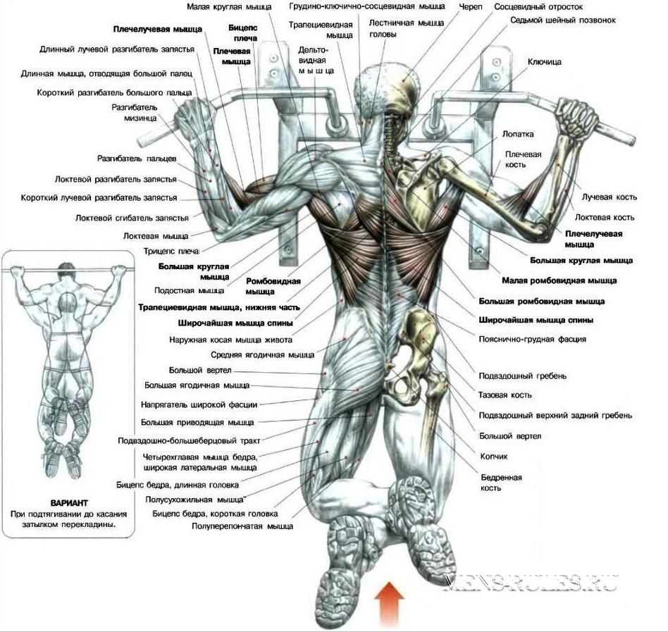 мышцы спины в домашних условиях