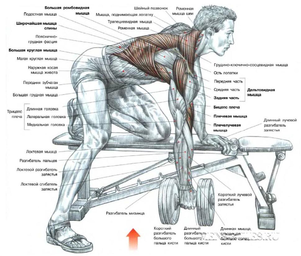 накачать мышцы спины в домашних условиях