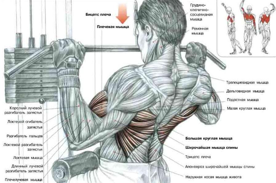 Особенности выполнения упражнений на спину