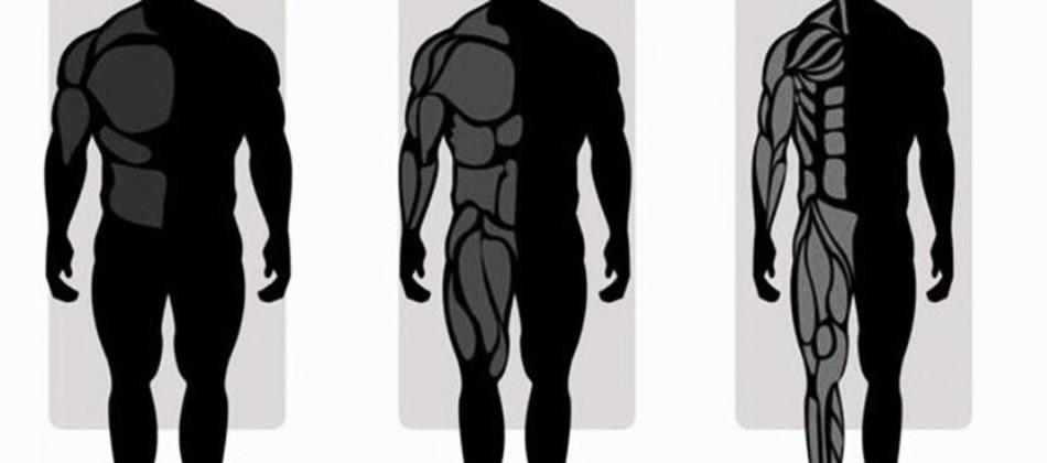 Как определить тип телосложения у мужчин и подобрать вид тренировки