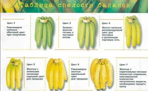 спелость бананов