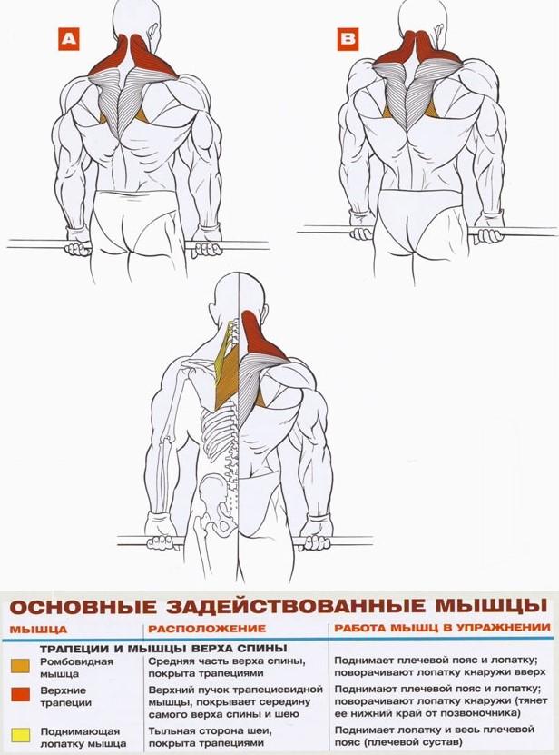 шраги со штангой упражнения